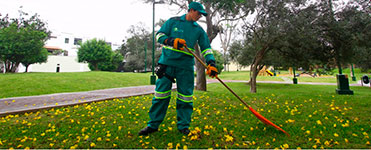 CLEANING GREEN AREAS